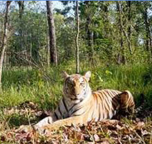 Royal_bardia_national_park